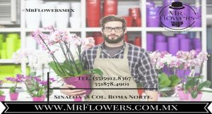 Arreglos Florales para Bodas Civiles atención