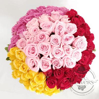 Arreglo con 100 Rosas 4 colores 2
