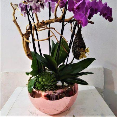 3 orquidea dobles mixtas base rosa